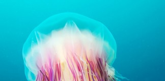 Stunning underwater photography Jellyfish by Alexander Semenov