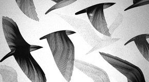 fine art birds graphics