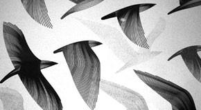 fine art birds graphics