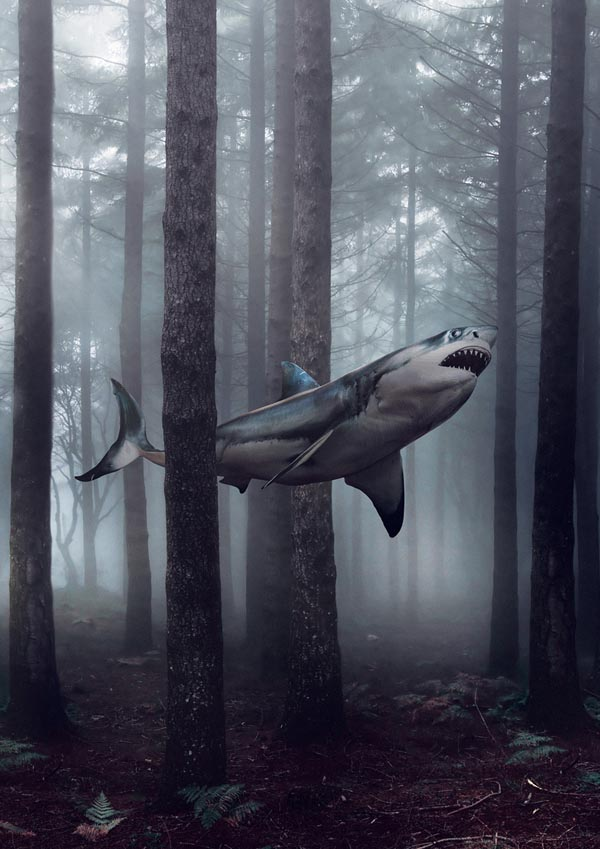 Shark in a Forest - Surreal Artwork by Jack Crossing