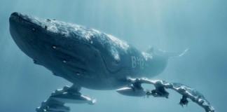 Sea Shepherd Campaign