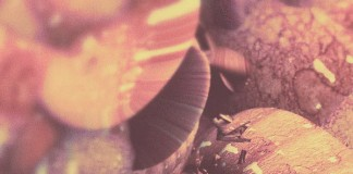 Metamorphosen - Abstract Digital Illustration by Atelier Olschinsky