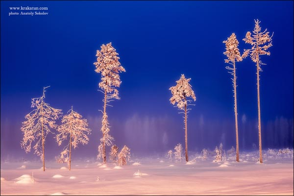 Landscape Photography of Snow and Trees by Anatoly Sokolov