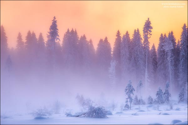 Winter Forest Landscape Photography by Anatoly Sokolov