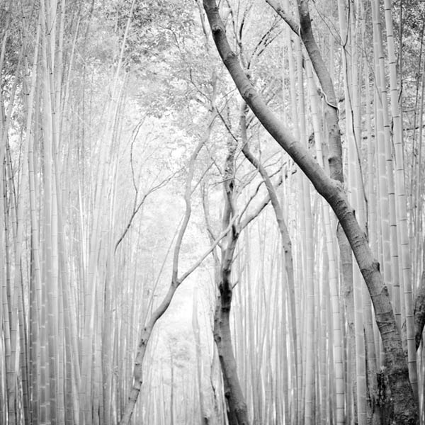 HONSHŪ - Trees Photography by Peter Zeglis