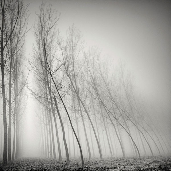 Tree Landscape Photography by Pierre Pellegrini