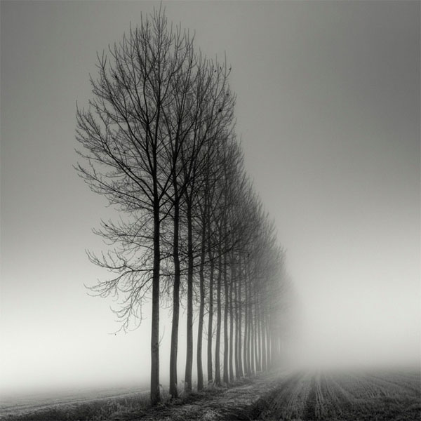 landscapes trees fog - photo #40
