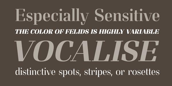 Felis - Serif Font Family