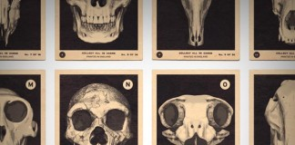 Skulls A to Z - Alphabet Print by 67 Inc - close up