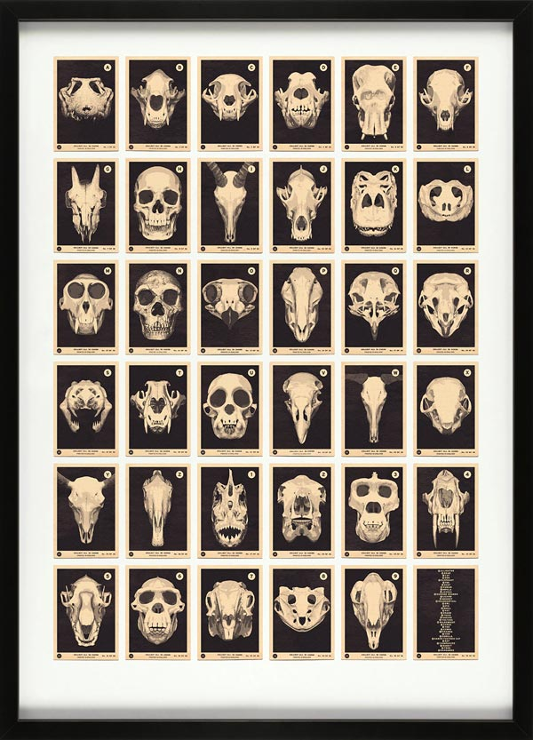 Skulls A to Z – Alphabet Print by 67 Inc