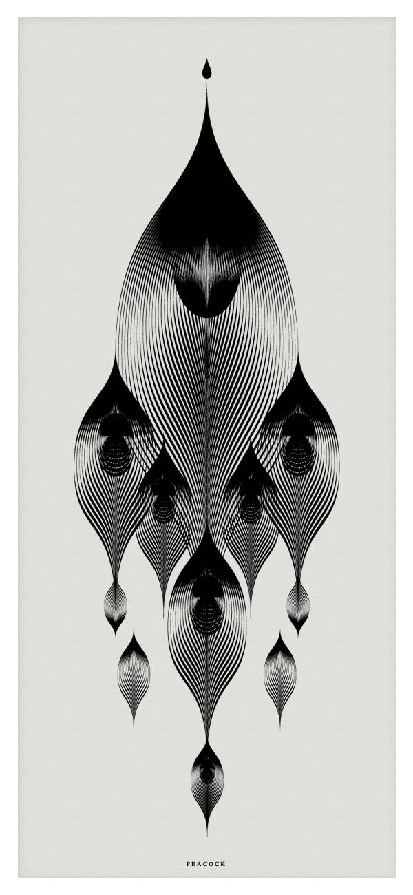 Peacock - Vector Illustration by Andrea Minini