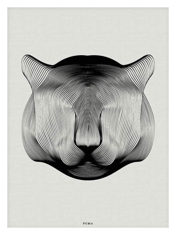 Puma - Vector Illustration by Andrea Minini