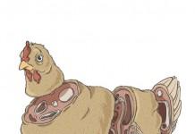 Sliced chicken illustration by Alexandre Godreau