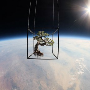 Plants on a Space Flight by Japanese Artist Azuma Makoto