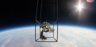 Bonsai Tree Space Flight - Exobiotanica - Botanical Space Flight by Japanese artist Azuma Makoto and his team.