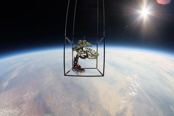 Bonsai Tree Space Flight - Exobiotanica - Botanical Space Flight by Japanese artist Azuma Makoto and his team.
