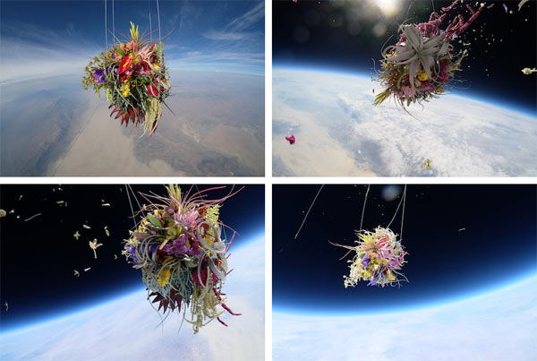 Different views of the plants in space attached to a special helium balloon.