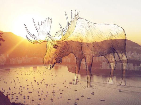 A moose in the bay of Rio de Janeiro.
