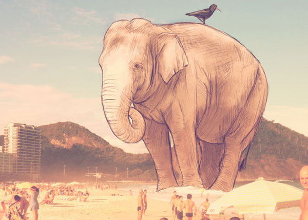 Elephant on the beach.