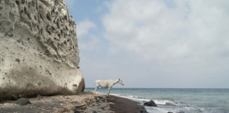 1 Horse at the sea - VEDEMA photo series by Petros Koublis for the the Greek island of Santorini.