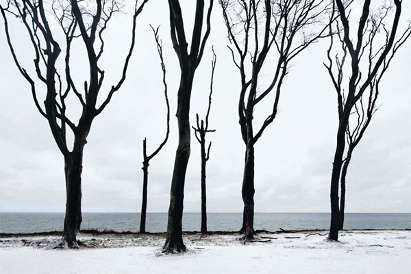 Bare trees in the snow.