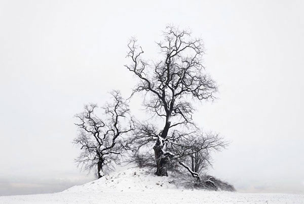 Old stunted trees on a small snowy hill.