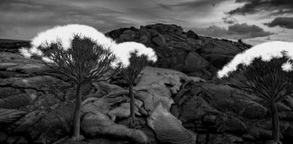 Gnarly tree growths - a scene like something from another planet.
