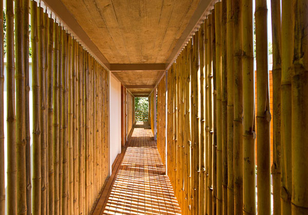 The long corridor is laterally delimited by bamboo trees, where the light can shine through.
