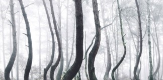 The Crooked Forest, a photo series by Kilian Schönberger.