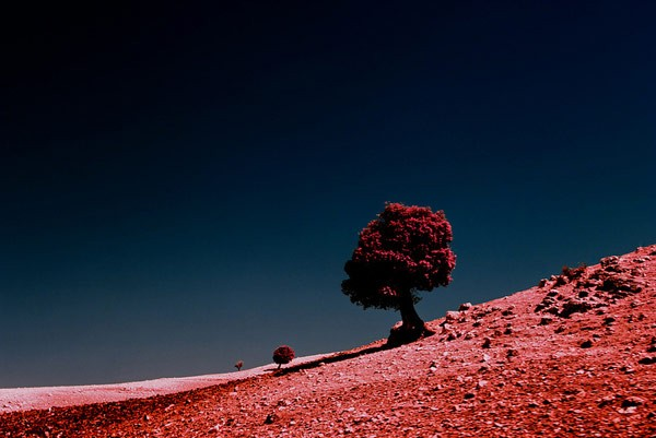 A color scheme of red and purple in front of a dark blue sky.