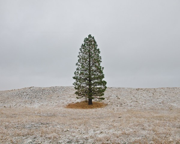 A lonely tree captured by Jacob Howard. One of the images that have been awarded as best photography featured in 2015 on WE AND THE COLOR.