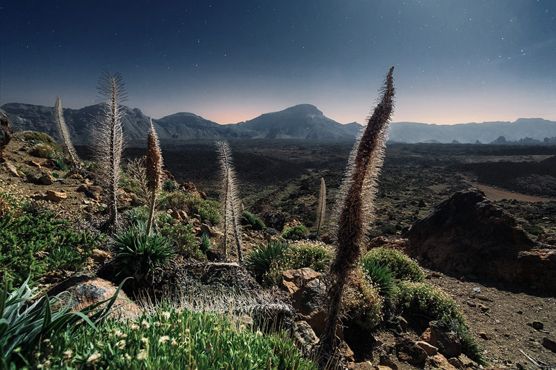 Canary Islands Captured By Lukas Furlan