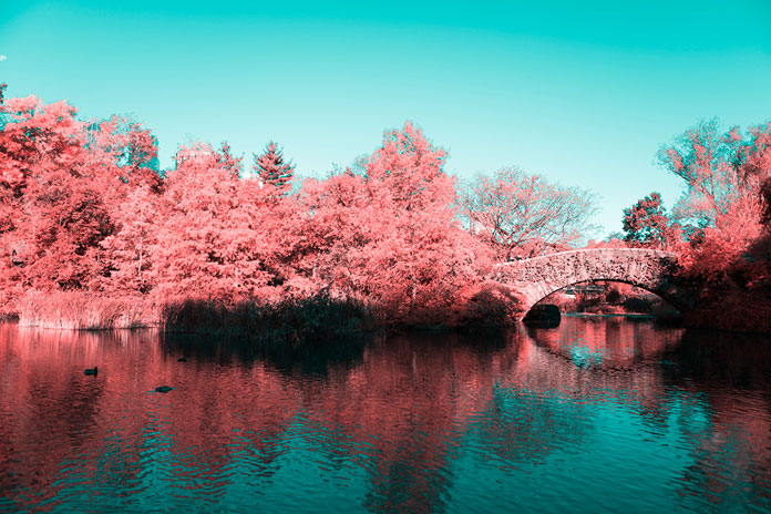 The graphic designer and photographer has taken numerous infrared/aerochrome photos of the famous Central Park.