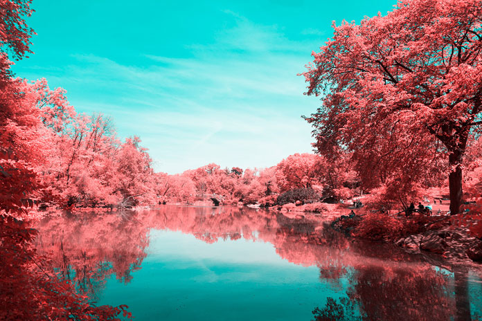 INFRARED NYC is a series that shows the famous Central Park in otherworldly pink and blue colors.