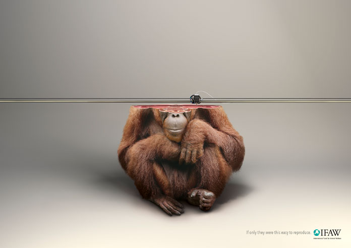 IFAW – Orang-Utan 3D print illustration by Y&R Paris.