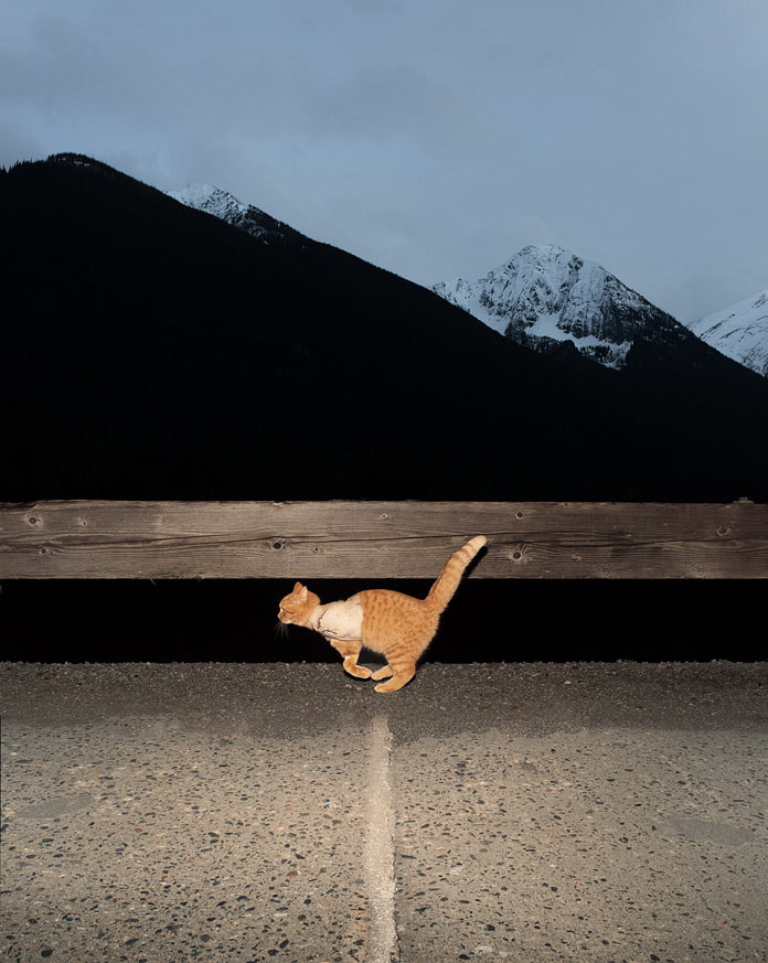 """Willson the Cat after the dog attack"", Jasper, Alberta, Canada, 2015."