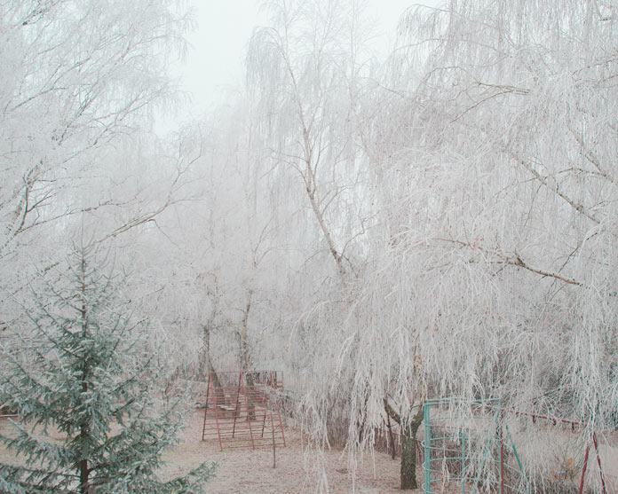 Trees covered with frost.