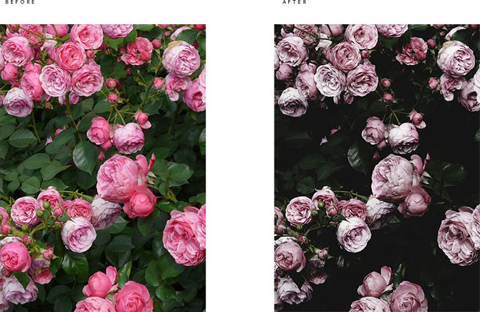 Roses - before and after