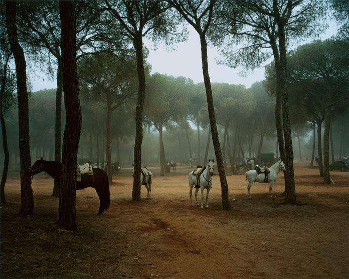 Emma Hardy, horses and trees