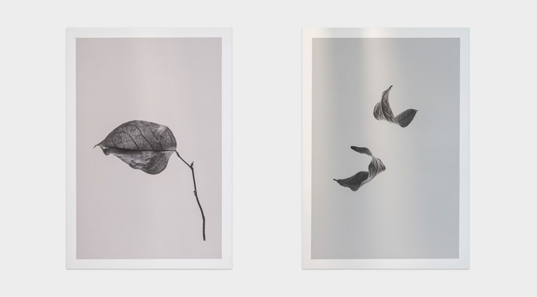 Sabi Leaves fine art prints by Norm Architects and Paper Collective.