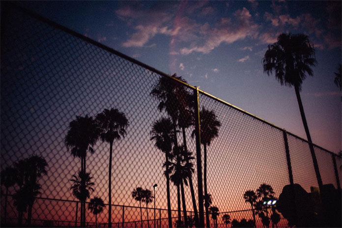 André Josselin, Palms after sunset at Venice Beach.