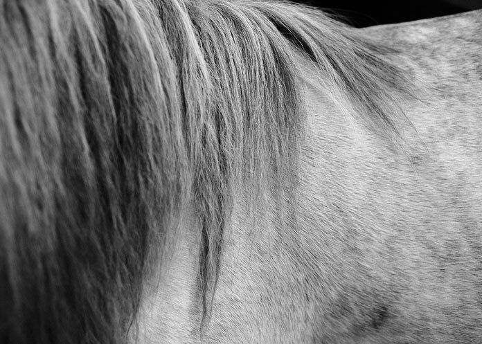 Kim Høltermand Photography, the fur and the mane of a horse