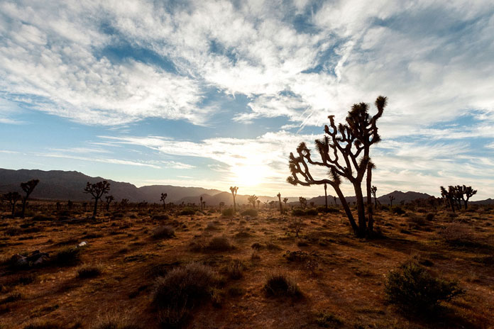 End of day at Joshua Tree.