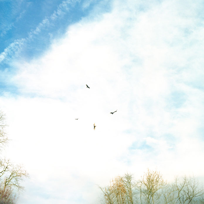 Birds circling in the air.
