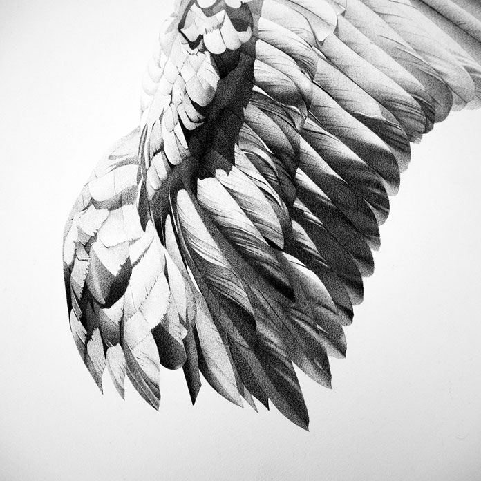 Close up of the wing drawing.