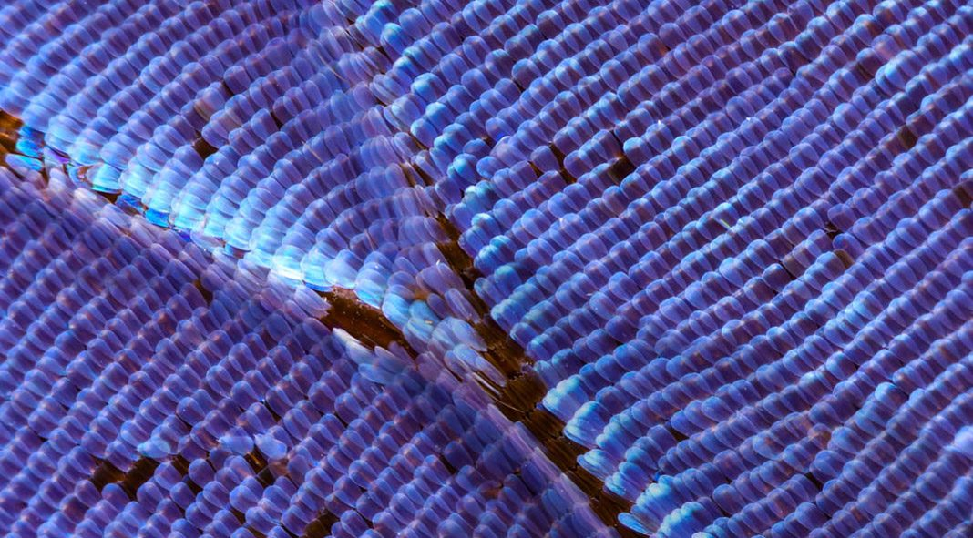 Butterfly wings macro photography by Chris Perani