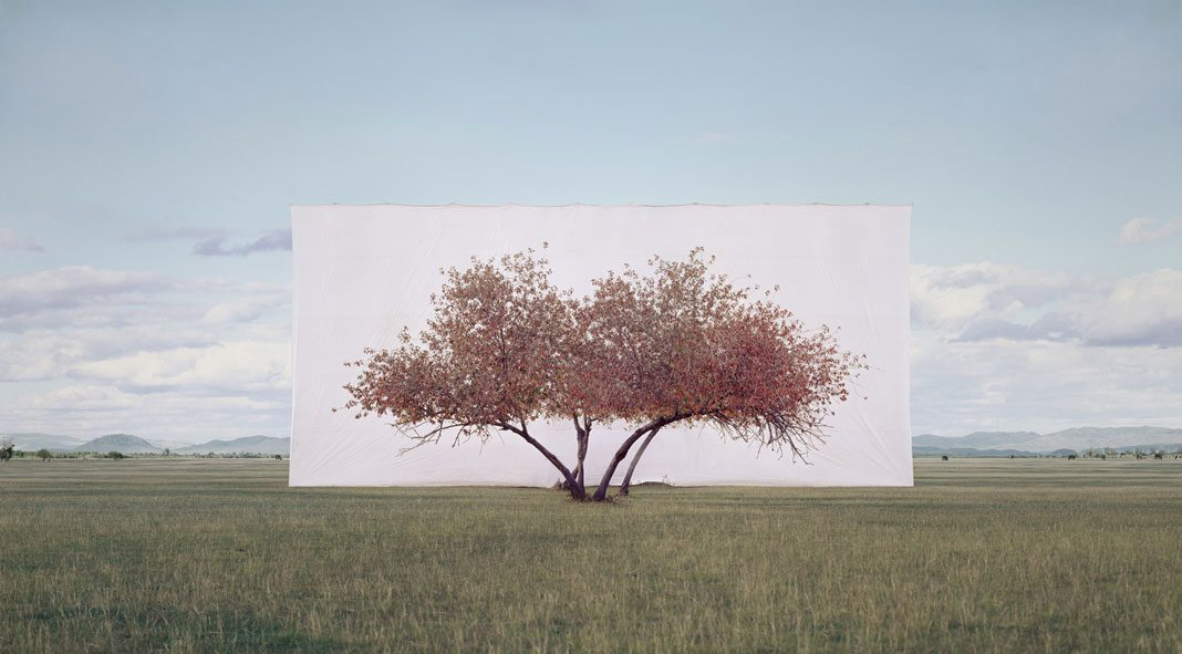 Myoung Ho Lee, Trees framed by South Korean artist Myoung Ho Lee