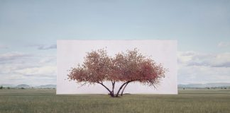 Myoung Ho Lee, Trees framed by South Korean artist Myoung Ho Lee