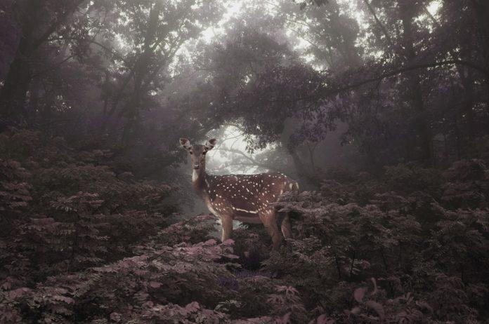 Anaïs - Petros Koublis Photography