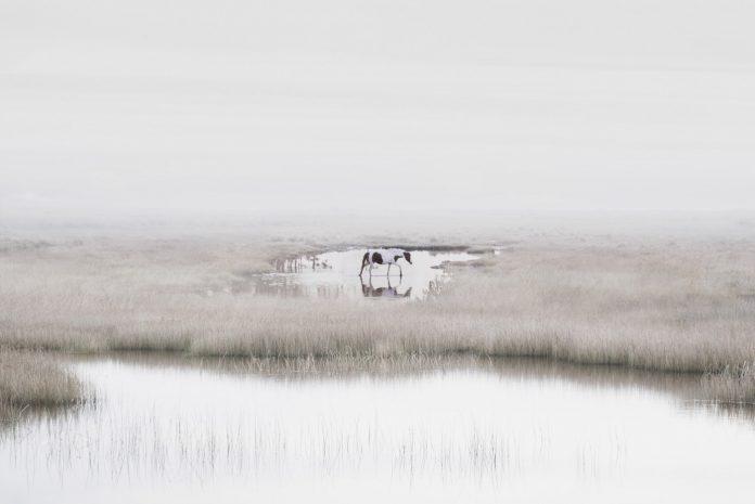 Heloise - Petros Koublis Photography